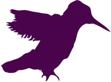 σκοτεινή πορφυρή σκιαγραφία κολιβρίων Στοκ εικόνα με δικαίωμα ελεύθερης χρήσης