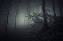Σκοτεινή σκηνή αποκριών στο δάσος Στοκ Εικόνες