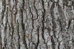 Σκοτεινή σύσταση του φλοιού δέντρων Στοκ Φωτογραφία