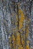 Σκοτεινή σύσταση του φλοιού δέντρων Στοκ Εικόνες