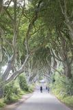 Σκοτεινοί φράκτες, κομητεία Antrim, Βόρεια Ιρλανδία Στοκ Εικόνες