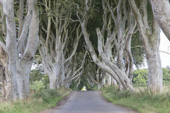 Σκοτεινοί φράκτες, κομητεία Antrim, Βόρεια Ιρλανδία Στοκ εικόνες με δικαίωμα ελεύθερης χρήσης