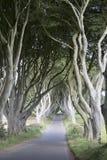 Σκοτεινοί φράκτες, κομητεία Antrim, Βόρεια Ιρλανδία Στοκ Φωτογραφία