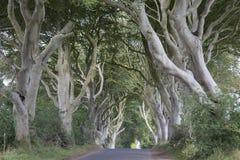 Σκοτεινοί φράκτες, κομητεία Antrim, Βόρεια Ιρλανδία Στοκ Εικόνα