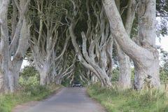 Σκοτεινοί φράκτες, κομητεία Antrim, Βόρεια Ιρλανδία Στοκ φωτογραφία με δικαίωμα ελεύθερης χρήσης