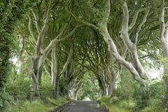 Σκοτεινοί φράκτες, κομητεία Antrim στοκ φωτογραφία με δικαίωμα ελεύθερης χρήσης