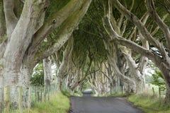Σκοτεινοί φράκτες, κομητεία Antrim στοκ φωτογραφία
