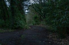 Σκοτεινός δρόμος στο δάσος με τη νεκρές βλάστηση/τη φωτογραφία ενός σκούρο πράσινο δάσους με τις χαμηλές σκιές στοκ εικόνα