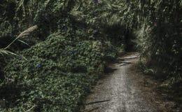 σκοτεινός δρόμος Στοκ εικόνες με δικαίωμα ελεύθερης χρήσης