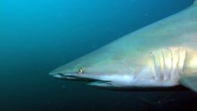 0 σκοτεινός καρχαρίας Στοκ φωτογραφία με δικαίωμα ελεύθερης χρήσης