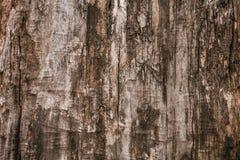 Σκοτεινός καφετής βρώμικος shabby φλοιός δέντρων Παλαιά ξύλινη καφετιά δρύινη σύσταση υποβάθρου σχεδίων Το καφετί σκοτεινό δέντρο στοκ φωτογραφίες με δικαίωμα ελεύθερης χρήσης