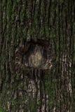 Σκοτεινός καφετής φλοιός δέντρων που καλύπτεται με το πράσινο βρύο στοκ εικόνες με δικαίωμα ελεύθερης χρήσης
