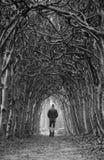 Σκοτεινός περίπατος Στοκ φωτογραφίες με δικαίωμα ελεύθερης χρήσης