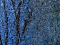 Σκοτεινός φλοιός δέντρων στοκ εικόνες