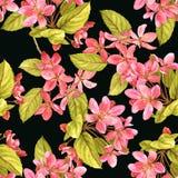 Σκοτεινό άνευ ραφής σχέδιο watercolor ανθών κερασιών ρόδινο ελεύθερη απεικόνιση δικαιώματος