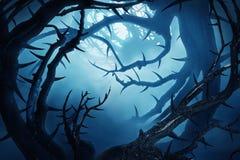 Σκοτεινό δάσος με τους ακανθώδεις θάμνους Στοκ εικόνες με δικαίωμα ελεύθερης χρήσης