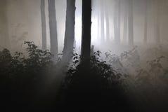 Σκοτεινό δάσος νύχτας σε μια ομίχλη 03 Στοκ Φωτογραφίες