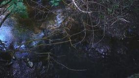 Σκοτεινό δάσος σε βάθη του φυλλώματος και ενός ρεύματος βουνών απόθεμα βίντεο