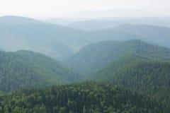 Σκοτεινό δάσος στο τοπίο ελαφριάς ομίχλης Στοκ Εικόνες