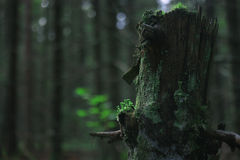 Σκοτεινό δάσος φθινοπώρου Στοκ Φωτογραφίες