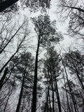 σκοτεινό δάσος Στοκ Εικόνες