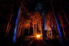 σκοτεινό δάσος Στοκ Φωτογραφία
