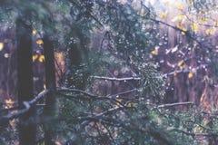 σκοτεινό δάσος Στοκ Φωτογραφίες
