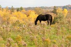 Σκοτεινό άλογο έξω στο λιβάδι στοκ εικόνα