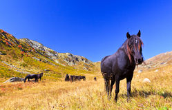 Σκοτεινό άλογο που εξετάζει τη κάμερα Στοκ φωτογραφία με δικαίωμα ελεύθερης χρήσης