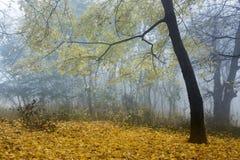 Σκοτεινό δέντρο με τα κίτρινα φύλλα στην ομίχλη Στοκ Φωτογραφίες