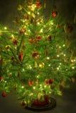 Σκοτεινό δέντρο Στοκ Εικόνες