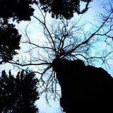 σκοτεινό δέντρο Στοκ φωτογραφία με δικαίωμα ελεύθερης χρήσης