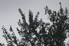 σκοτεινό δέντρο Στοκ Εικόνα