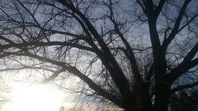 σκοτεινό δέντρο Στοκ εικόνες με δικαίωμα ελεύθερης χρήσης