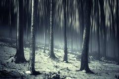 Σκοτεινό ανατριχιαστικό υπερφυσικό δάσος με την ομίχλη και το χιόνι Στοκ εικόνα με δικαίωμα ελεύθερης χρήσης