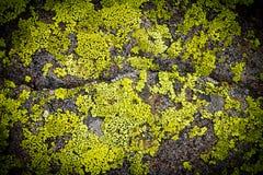 Σκοτεινό βρώμικο πρότυπο σύστασης ανασκόπησης βράχου Στοκ Φωτογραφίες