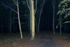 Σκοτεινό δάσος τη νύχτα Στοκ Εικόνα