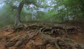 σκοτεινό δάσος cremea Στοκ Εικόνες