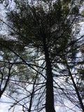 Σκοτεινό δέντρο, πρόωρο δάσος φθινοπώρου Στοκ Εικόνες