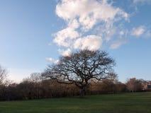 σκοτεινό δέντρο στον τομέα με τα σύννεφα ανωτέρω, τη χλόη κατωτέρω, και το μπλε ουρανό Στοκ Φωτογραφίες
