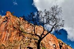 Σκοτεινό δέντρο στο εθνικό πάρκο Zion Στοκ φωτογραφία με δικαίωμα ελεύθερης χρήσης