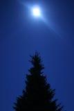 σκοτεινό δέντρο Στοκ Φωτογραφία