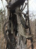 σκοτεινό δέντρο autumnal forest Στοκ Φωτογραφίες