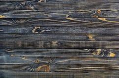 σκοτεινό διανυσματικό δάσος ανασκόπησης Στοκ φωτογραφίες με δικαίωμα ελεύθερης χρήσης