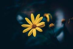 Σκοτεινό λουλούδι στο φως βραδιού στοκ φωτογραφίες με δικαίωμα ελεύθερης χρήσης