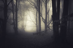 Σκοτεινό μυστήριο δάσος με την ομίχλη Στοκ φωτογραφία με δικαίωμα ελεύθερης χρήσης