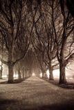 σκοτεινό πάρκο αλεών Στοκ Εικόνες