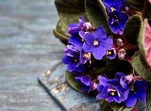 Σκοτεινό πορφυρό λουλούδι βιολέτων στοκ φωτογραφία