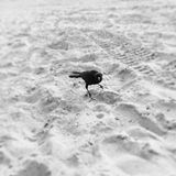 Σκοτεινό πλάσμα Στοκ φωτογραφία με δικαίωμα ελεύθερης χρήσης
