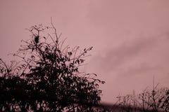 Σκοτεινό σούρουπο καρμινίου με τη σκιαγραφία δέντρων στοκ εικόνα με δικαίωμα ελεύθερης χρήσης